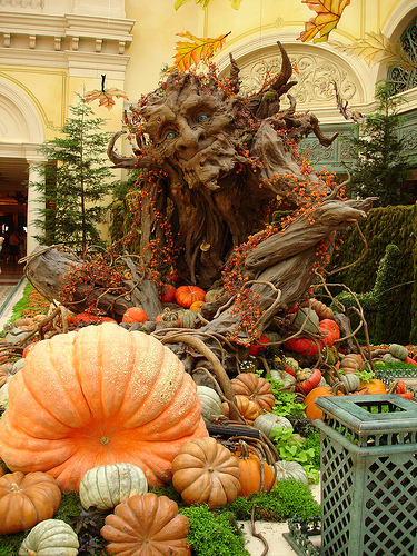 Post image for Bellagio Seasonal Display | Picture Las Vegas